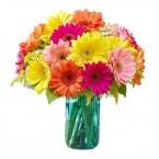send Gerberas Flower in Vase delivery