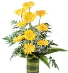 send Yellow Gerbera Vase delivery