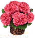 send carnation flower basket delivery