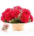 send 10 Red Carnation Flower Basket delivery