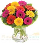 send 12 Gerberas Flower vase delivery