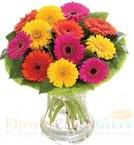 send 12 Gerberas Flower vase delivery