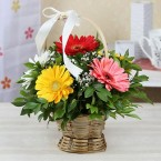 send Bunch of 8 Gerberas in a Round Basket delivery