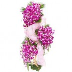 send  Ravishing Orchids delivery