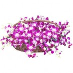 send 50 Purple Orchids in a Basket delivery