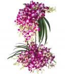 send royal purple orchid arrangement delivery