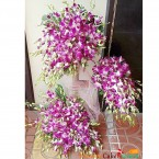 send hearty purple orchid tall arrangement delivery