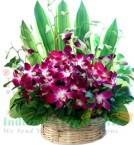 send 10 orchid flower basket delivery